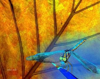 Dragonfly Art, Digital Photomontage Composite, Blue Golden Yellow, Orange Leaf, Woodland Wildlife, Wall Hanging, Home Decor, 8 x 10