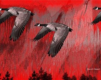 Bird Art, Canadian Geese in Flight, Bird Flying, Wildlife Wilderness, Woodland Animal, Wall Hanging, Home Decor, Giclee Print, 8 x 10