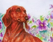 Red Dachshund, Fine Art Print 5x7