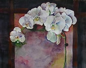 White Orchid  10 x 7  free shipping
