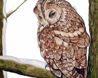 Tawny Owl A4  limited edition digital print