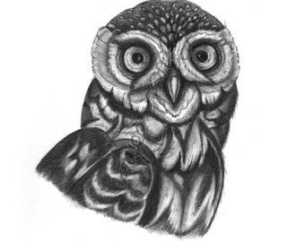 A4 Little owl wildlife art  print