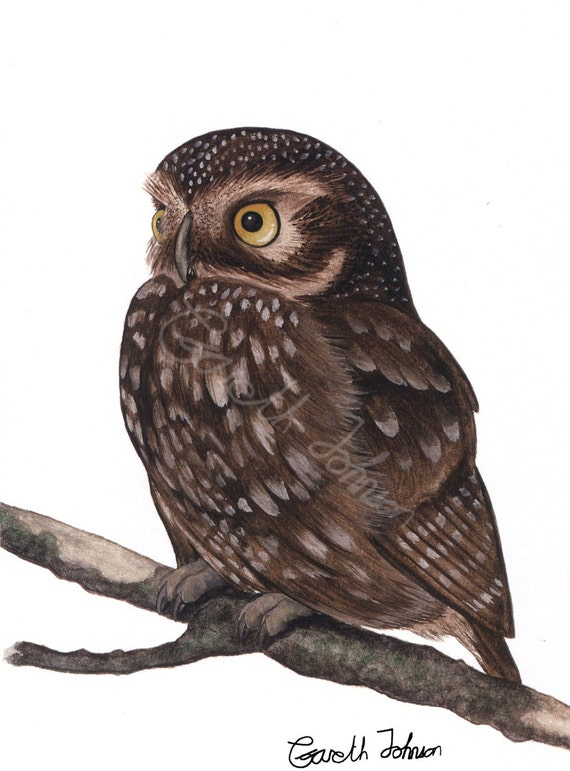 Little-Owl A4 digital print