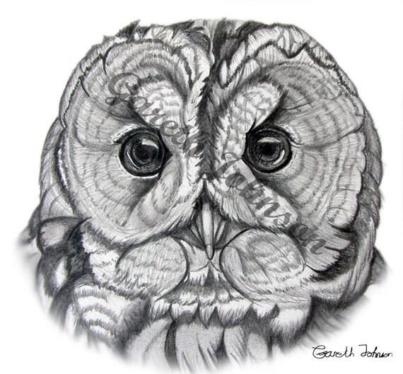 Tawny Owl sketch A4 Print