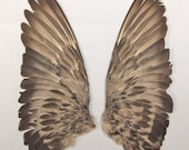 PIGEON WINGS (L) real bird parts for taxidermy crafts, feather jewelry, mask, fan, hat, and costume making