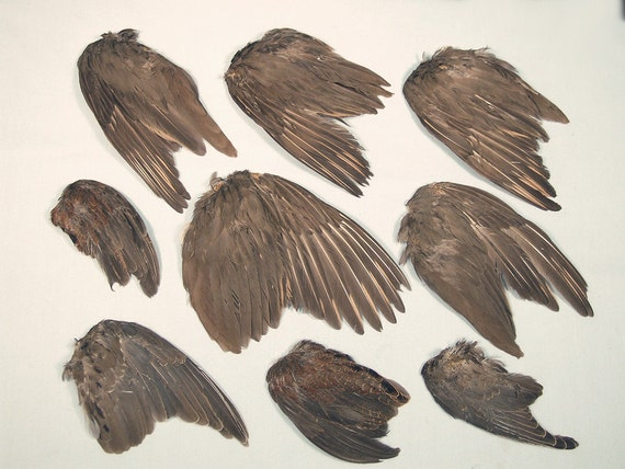 Craft Wing Set 2nd Quality Real Bird Parts For By Chimeracurio