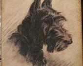 Black Scotty Dog Gift Tags