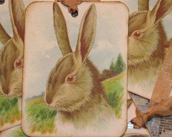 Bunny Rabbit Gift Tags