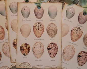 Large Bird Eggs Chart Tags