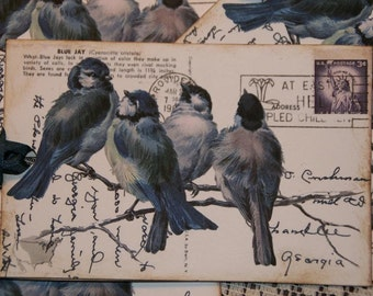 Birds On A Branch Vintage Post Card Gift Tags