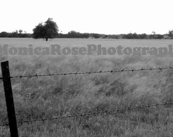 Barbed Wire Fence Fine Art Print