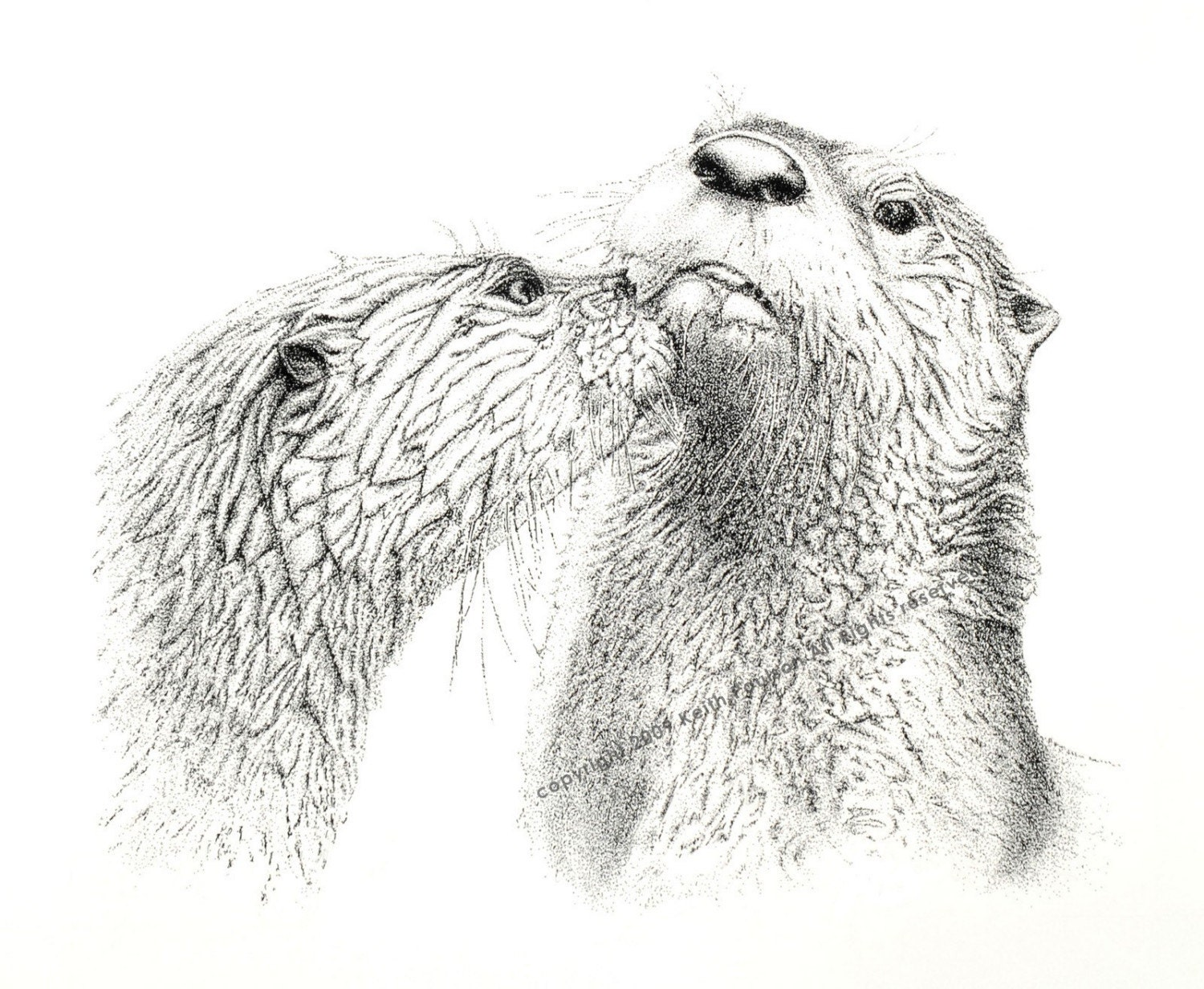 River Otters Pen and Ink Drawing Print Signed by Artist