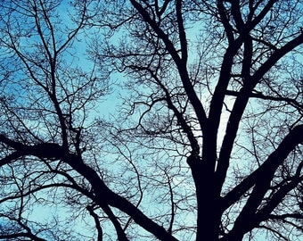 CLEARANCE - Bare Tree, Blue Sky - 8x10 fine art photography