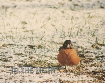 Cold Robin - fine art photography