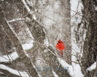 READY TO SHIP - Cardinal in Snow #5 - fine art photography