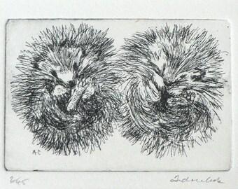 original etching of 2 hedgehogs