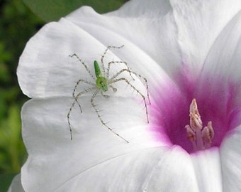 Green Spider Photograph - Beauty and the Beast - 5x7