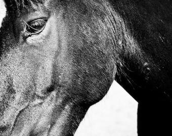11x14 fine art horse metallic photograph mustang