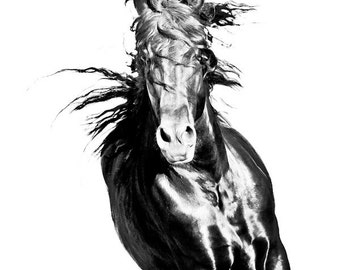 11x14 fine art horse metallic photograph