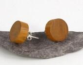 Yew wood stud earrings