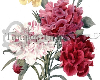 Vintage French Carnation Clipart: Commercial Use - Image No. R4 Instant Download