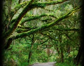 SALE - 8 x 8 Wood Mounted Forest Photography - Island Photography - Canopy Road Photo - Nature - Fine Art Photograph by Kelly Warren