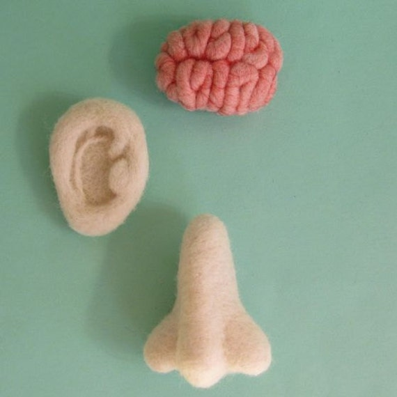 Ear, Nose and Brain Brooch Set MADE TO ORDER