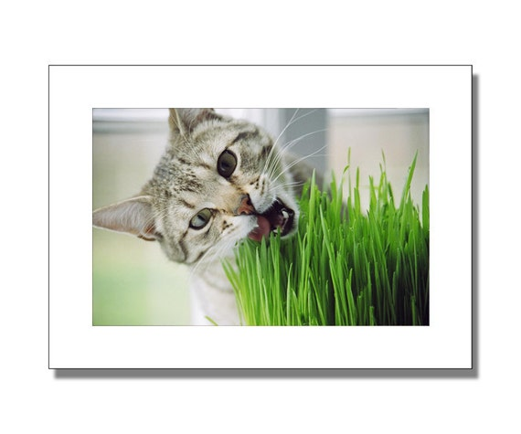 Photo Greeting Cards & Note Cards - - My Cat Cheerio