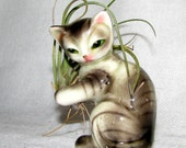GRAY KITTY and AIR PLANT ARRANGEMENT -- LIVE PLANT TILLANDSIA BROMELIADS and VINTAGE GRAY CAT FIGURINE
