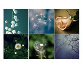 Collection of  nature Photos - downloadable photos in JPG format
