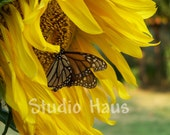 Butterfly Sunflower - 5x7 - Flower, Monarch, Yellow, Sunshine, Flower, Garden - Fine Art Photography Print