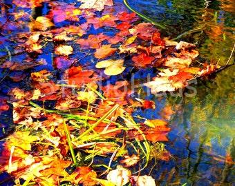 Autumn Splendor - 5x7 - Fine Art Photography Print
