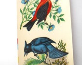 Duro Decal- Scarlet Tanager and Blue Jay