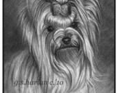 Yorkie Dog Fine Art Note Cards