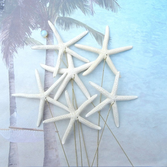 6 Large Natural Pencil Starfish for a Wedding Bouquet Bridal Bouquet or Centerpiece