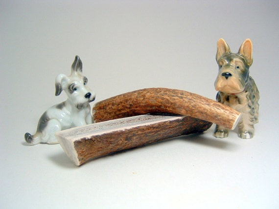 Small Whole Antler Dog Chew -Sized for Dogs 10-25 lbs.