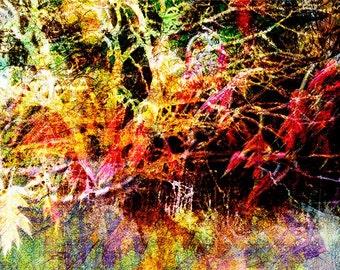 Oak 1.2 Photo Art