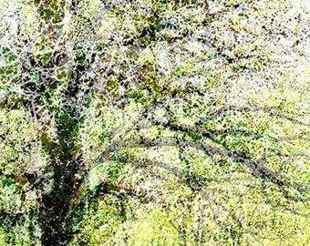 The Tree 1 Photo Art