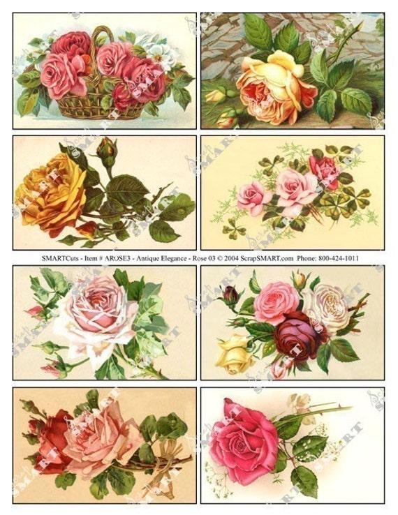 Roses of All Colors-8 Vintage Images on a Collage Sheet Digital Download-  AROSE3