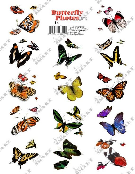 Butterflys - 14 types of beautiful butterflys in flight on a Collage Sheet Digital Download - ST14BFP02