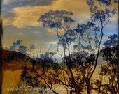 Desert Pine - 5 x 5 fine art photograph