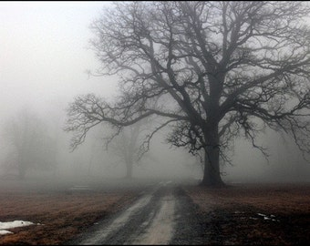 Halloween 100 yr old trees with fog landscape print matte print