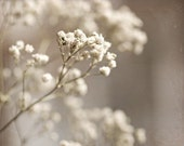 Romantic Photography nature White art macro wedding shabby chic for her pale cream neutral snow flowers tan babys breath wall art home decor