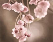 Nature Photography Spring Romantic wall art light pink brown for her under 50 flowers faded pale blooms blossoms - Fine Art Photography