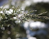 Nature Photography Winter macro snow ice under 25 for him men sparkly sparkles green white soft tree home decor wall art - Fine Art Photo