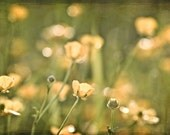 Nature Photography flowers wall art home decor for her buttercups yellow citrine mustard green romantic sparkles photograph - Fine Art Print