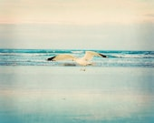 Nature Photography Summer Bird Fathers Day Dad animal seagull for her for him men dude nautical ocean sea water aqua blue - Fine Art Photo