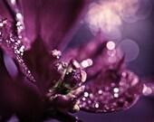 Abstract Photography macro Sparkles home decor wall art purple plum sparkly romantic dark women spring elegant - Fine Art Photograph Print