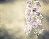 Nature Photography romantic Ready to ship Spring light purple for her women shabby chic flowers gold golden soft - Fine Art Photograph Print