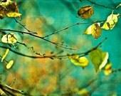 Autumn fall leaves turquoise mustard green yellow gold golden citrine men dude women - Autumn - Fine Art Photography Print